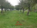 Teren intravilan in Campina,cartier Voila,3000mp,utilitati !