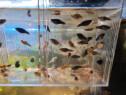 Pesti acvariu