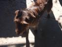 Câine de vânătoare