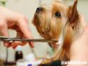 Curs Autorizat Hair Styling Canin Brasov