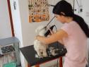 Curs frizerie canina autorizat Targu Mures