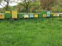 5 familii de albine pe 8-10 rame, cu miere, neroite