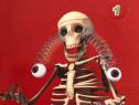 Corpul uman Schelet+reviste