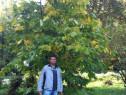 A paw paw -  banana nordului  altoite1,5 - 1,7m