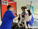 Curs Frizerie Canina, Cosmetica Canina Arad