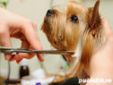 Curs Coafor Canin Sibiu