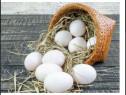 Oua de rata crescută la curte