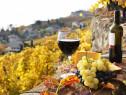 Vin din Vita Nobila - Cabernet Sauvignon