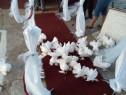 Închiriem porumbei albi pentru nunti botezuri aniversari