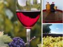 Vin de Dragasani -Pinot Noire Roze