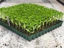 Personal in Sera/Horticultura (plantat/ambalat) -Olanda