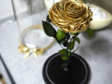 Trandafir criogenat XXL, Gold, in cupola de sticla