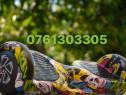 Hoverboard 1000w nou bonsu geanta bluetooth