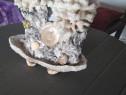 Corali decorativi