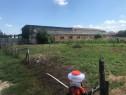 Teren intravilan 594 MP in centru Oarda de Jos cu utilitati