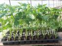 Rasaduri legume ardei rosii castraveti vinete salata telina