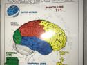 Carte Anatomia Creierului in limba engleza