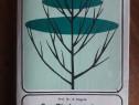 Taierea pomilor si arbustilor fructiferi - in germana