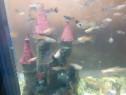 2 acvarii cu pesti