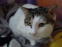 Lora pisica castrata adoptie