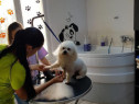 Cursuri Coafor Canin Timisoara
