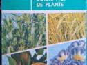 Cum se obțin soiuri noi de plante