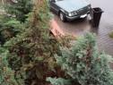 Mercedes-benz w124 E300 D