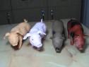 Animale domestice jucarii