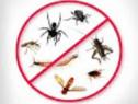Servicii de dezinsectie, deratizare si dezinfectie