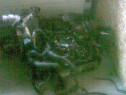 Dezmembrez motor 18tdci si cutie ford mondeo 2009