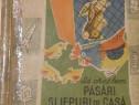 Sa crestem pasari si iepuri de casa de Mihai Balasescu