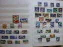 Clasor colectie 650 timbre străine