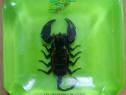 Scrumiera cu scorpion imperial
