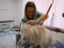 Cursuri de Frizerie Canina Targu Mures