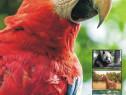 Calendar animale 2020 - personalizabil