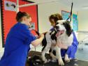 Curs frizerie canina autorizat Deva