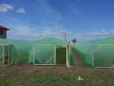 Solar legume si flori 24 m lungime /4 m deschidere