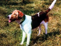 Câine, ilustrată necirculată din 1969