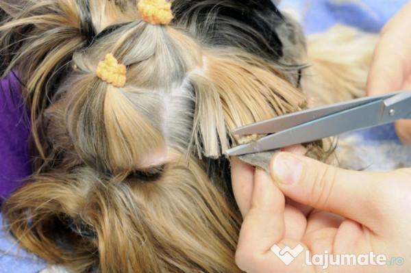 Curs Hair Styling Canin Suceava 2 250 Lei Lajumate Ro