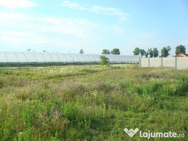 Vanzare  terenuri constructii  1773 mp Giurgiu, Mogosesti  - 26595 EURO