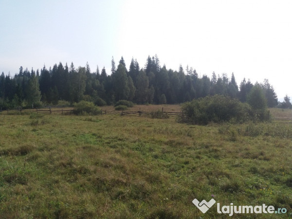 Vanzare  terenuri agricol  11.2 ha Suceava, Tesna (Poiana Stampei)  - 11500 EURO