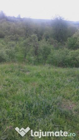 Vanzare  terenuri agricol  8000 mp Hunedoara, Coroiesti  - 25000 EURO