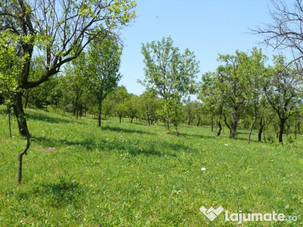 Vanzare  terenuri agricol  14 ha Prahova, Maneciu-Pamanteni  - 60000 EURO