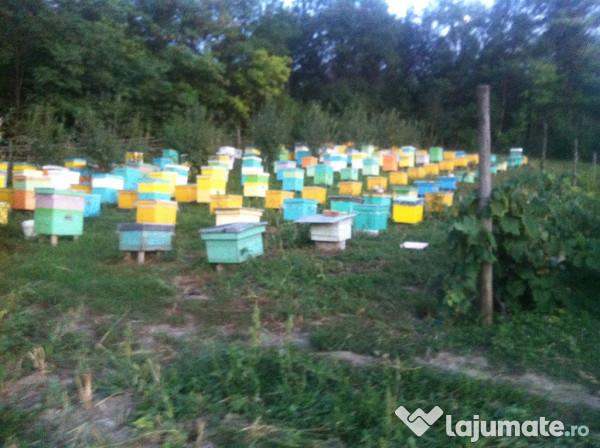 cumpar miere de tei