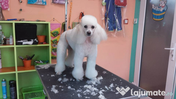 Angajam Ajutor Pt Salon Frizerie Canina 1200 Ron Lajumatero
